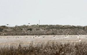 Il Comune di Brindisi partecipa al bando per la tutela dei paesaggi costieri: giovedì 3 incontro pubblico