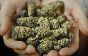 Da Milano a Brindisi con 170 grammi di marijuana in auto: arrestati due giovani