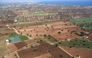 """Xylella nella Piana degli Ulivi monumentali, CIA: """"positivi gli impegni della Regione Puglia"""""""