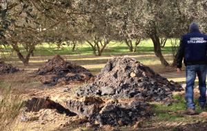 Ceneri di Cerano nei campi di Manduria: il video