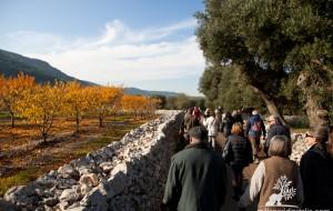 Millenari di Puglia: weekend con trekking e bici tra le prime fioriture di primavera