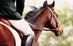 """Circolo Ippico Mitrano: ecco i progetti """"Il Cavallo nella scuola"""" e """"Un Cavallo per Amico"""""""