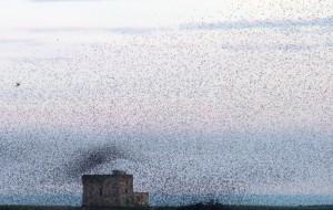 """Domenica a Torre Guaceto """"Aspettando il vento"""" e la Festa delle Oasi Wwf 2014"""