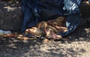 Scarti di macellazione al Rione Perrino: interviene la Polizia Municipale