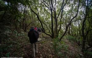22enne disoccupato con moglie e tre figli minaccia suicidio: ritrovato in un bosco. Adesso sta bene