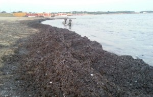 "Forum Ambiente: ""Brindisi, l'eterno problema delle coste"""