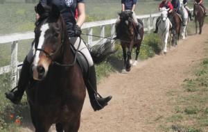 Circolo Ippico Mitrano: Campus estivi di equitazione per ragazzi