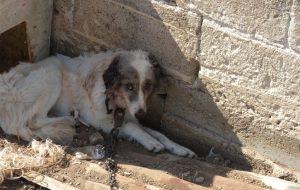 La Polizia Municipale denuncia cittadino per maltrattamento di animali