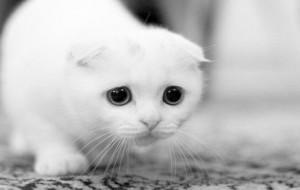 Colonie feline: il Comune di Brindisi potrà rilasciare il patentino