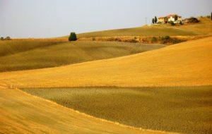 Venerdì 29 a Cisternino tavola rotonda sul valore dell'agro-biodiversità