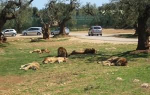 ZooSafari e Fasanolandia: pronti a riaprire con nuovi protocolli operativi per garantire alle famiglie una giornata di divertimento in tutta sicurezza