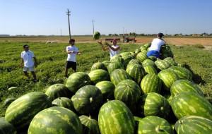 Sfrutta un extracomunitario in azienda agricola: denunciato imprenditore