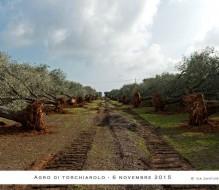 Emergenza Xylella – futuro forestale, agrario e ambientale del Salento: se ne parla il 29 Marzo a Torchiarolo