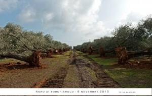 """Provincia di Brindisi """"trincea"""" per la lotta alla xylella: 30 aprile termine ultimo per le lavorazioni dei terreni"""