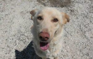 Abbandona il cane nella marina deserta: denunciata