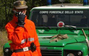 Il risultato di due mesi di controlli sui frantoi: 5 denunce e 6 sequestri operati dai Carabinieri Forestali