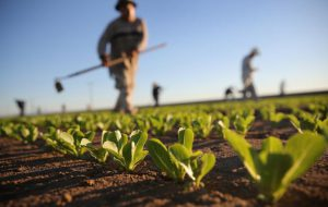 Decesso bracciante: Saponaro (Lega) e Portolano (BBC) chiedono ordinanza anticaldo in materia di lavoro agricolo
