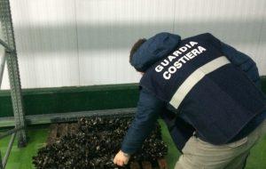 Sequestrato un quintale di cozze nere: erano sprovviste di indicazioni sulla provenienza