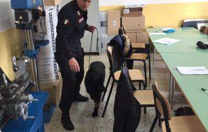 Controlli antidroga all'interno delle scuole: cani e Carabinieri in nove classi dell'IPSIA Ferraris