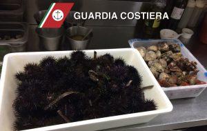 Sequestrati ricci e frutti di mare in un rinomato ristorante di Brindisi: multa per 4.500 euro
