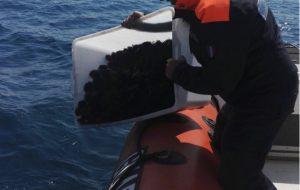 Sequestrati mille ricci di mare