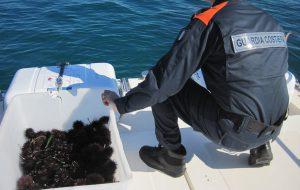 Pesca abusiva: sequestrati ricci, cozze e pesci serra; multe per 7mila euro