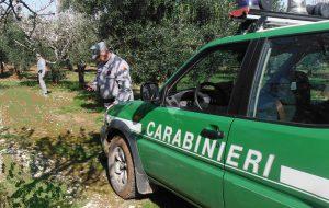 Controlli anti-xylella: i forestali multano proprietari di 34 terreni compresi enti pubblici