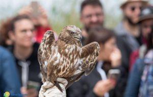 Festa delle Oasi 2017: liberati tre volatili a Torre Guaceto