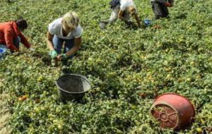 """Controlli della """"Task Force anti-caporalato"""": denunciato un imprenditore agricolo di Brindisi"""
