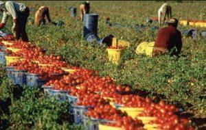 Attivata la rete del lavoro agricolo di qualità a Brindisi per la lotta al caporalato