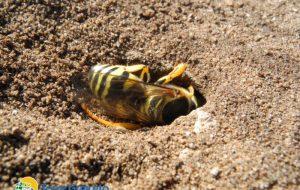 La vespa di Torre Guaceto: un'amica dell'ambiente e delle persone