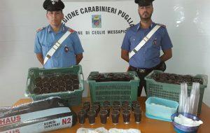 Droga: quattro arresti tra Brindisi e Oria