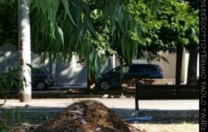 """Pulizia Santa Chiara, Taurino (NCS): """"lo schifo è ancora lì"""""""