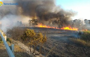 Incendio al canneto di Torre Guaceto: scongiurato l'arrivo delle fiamme in palude