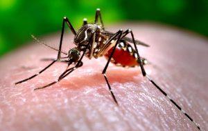 Emergenza chikungunya: Brindisi si difende con una disinfezione notturna