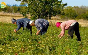 Giornata dell'alimentazione e delle migrazioni: la storia di Madi, Jubari e Abdul nella famiglia del Pomodoro Fiaschetto