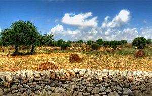 Recuperare la lentezza mediterranea. Di Anna Cinzia Gatti