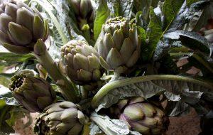 Assaggi e paesaggi: fari puntati sul carciofo brindisino