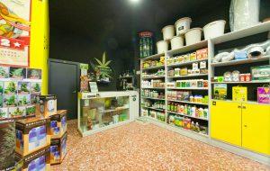 """Boom """"cannabusiness"""": Puglia al quinto posto, growshop anche in provincia di Brindisi"""