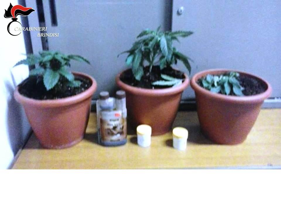 Tre piante di marijuana in camera da letto arrestato - Piante camera da letto ...