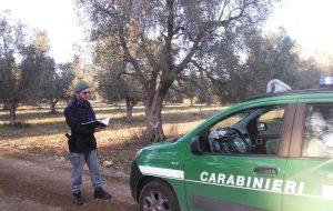 Xylella: i Carabinieri forestali in azione per la campagna di prevenzione e controllo