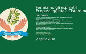 Cisternino: a Pasquetta Ecopasseggiata contro gli espianti degli ulivi