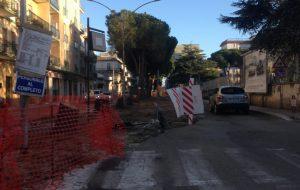 Oggi si rimuovono 14 pini da Viale San Giovanni Bosco. Verranno sostituiti da piante di tiglio