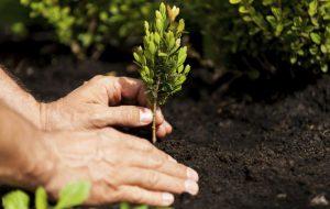A Ceglie un albero per ogni bambino nato o adottato