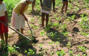 """Coronavirus: """"le disposizioni anti-contagio per i lavoratori della filiera agroalimentare"""""""
