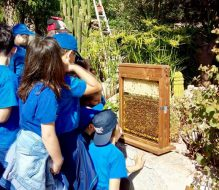 Domenica al Parco Dune Costiere la festa conclusiva del progetto di educazione ambientale sulle biodiversità agricole