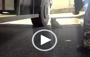 Il militare italiano e la volpe affamata: il commovente video che sta facendo il giro del web
