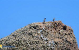 """Il video dei nuovi pulcini nati sulle spiagge di Torre Guaceto. L'appello del Consorzio: """"Aiutateci a proteggerli"""""""