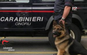 Controlli dei Carabinieri nella città di Brindisi: multe e denunce