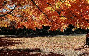 Arriva l'autunno. Per il corpo è stagione di transizione. Di Rocco Palmisano